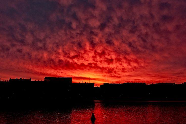 Swan in sunset by Henrik Vind on 500px