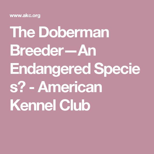 The Doberman Breeder—An EndangeredSpecies? - American Kennel Club