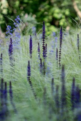 My Favorite Plant Combinations 60