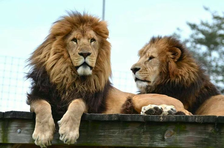 1000+ images about Conservator's Center; Mebane, NC on Pinterest