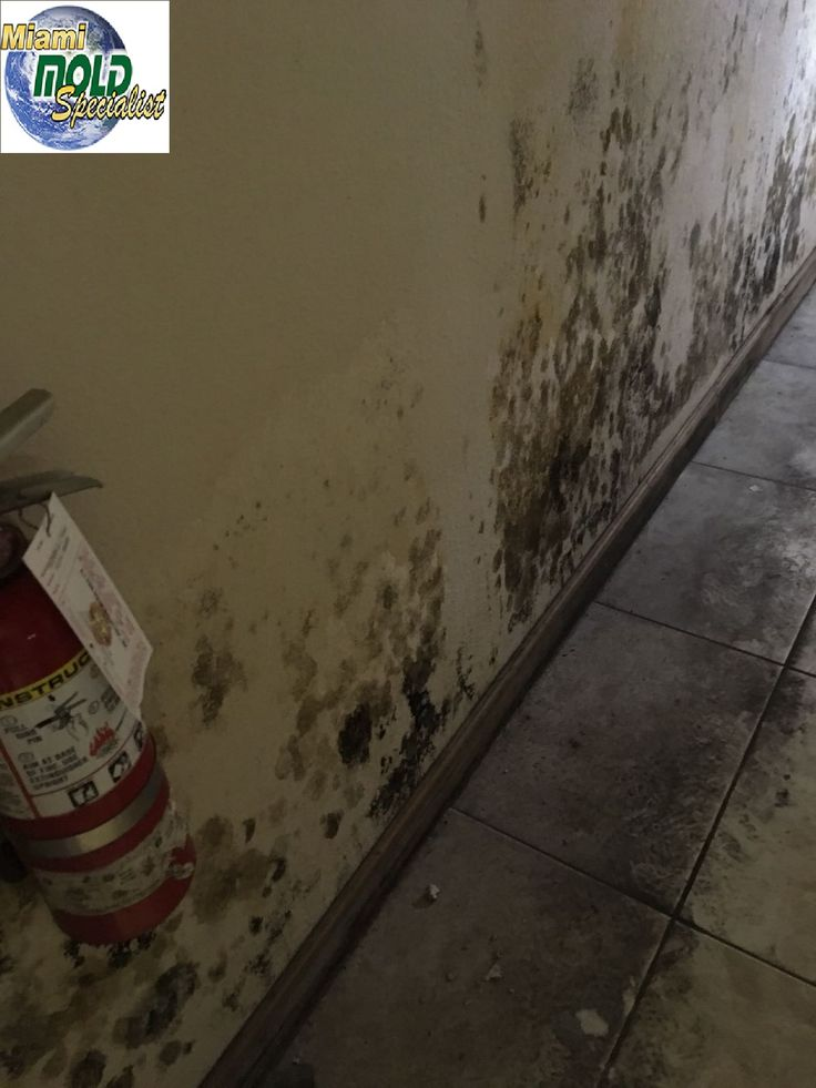. #MiamiMoldSpecialist's knowledgeable mold inspection, remediation professionals can answer all your questions just give a call at (305) 763-8070 / (786) 453-2148