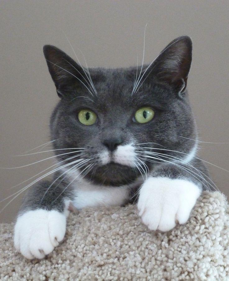1000 Ideas About Grey Tuxedo On Pinterest Groom Tux