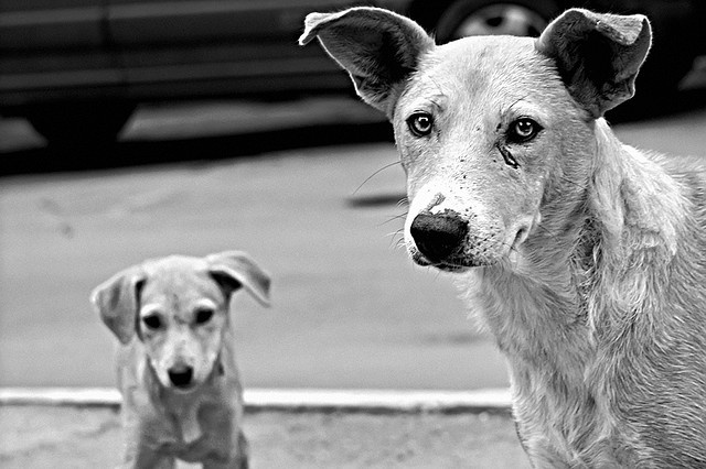 responsibility    Street dogs of the Kishinew