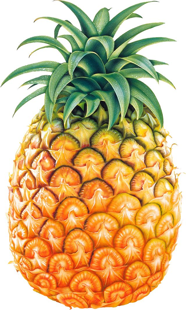 Pineapple fruit PNG image