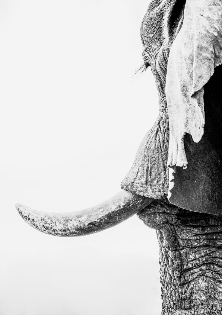 THE WINNERS & FINALISTS IN THE WORLD ELEPHANT DAY PHOTO COMPETITION Corlette Wessels