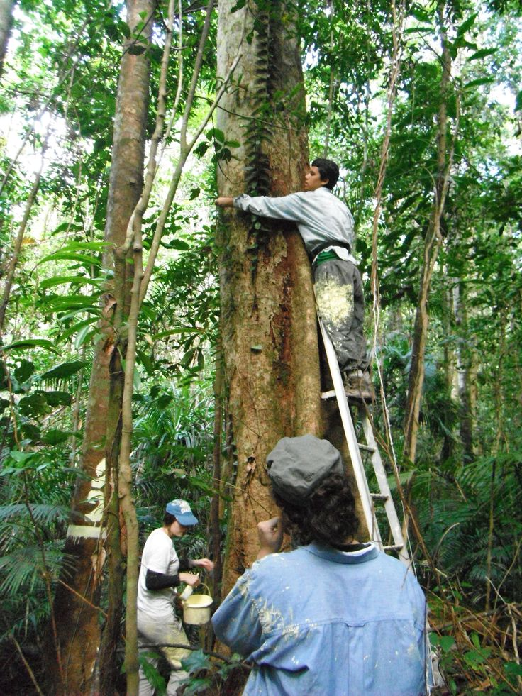 Our rainforest research plot near Cairns helps us answer questions about the health of this unique Australian environment and any impacts that might arise from climate change.