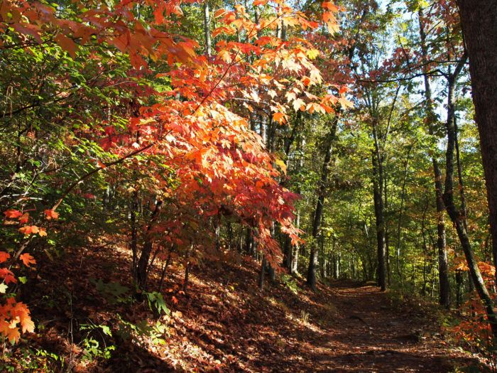 10 Magnificent Trails You Have To Hike In Georgia Before You Die