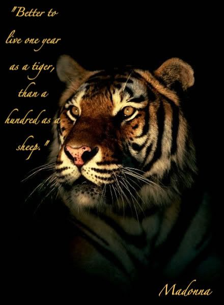 tiger quotes | Tiger Quote Graphics Code | Tiger Quote Comments & Pictures