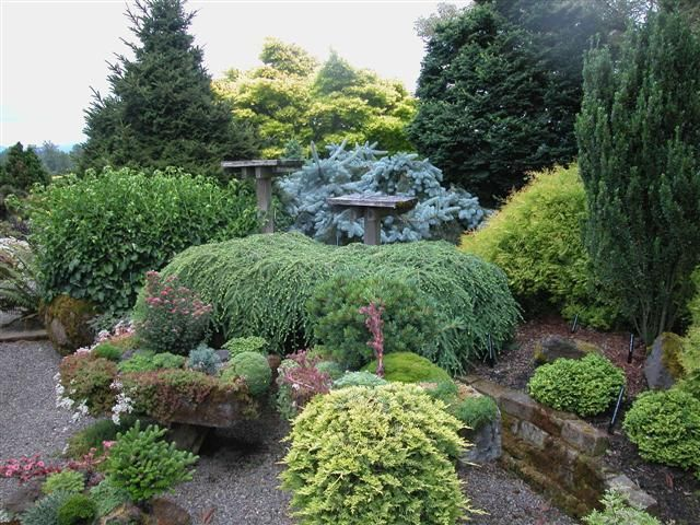 Conifer Garden Ideas conifers shine through four seasons Find This Pin And More On Garden Conifers