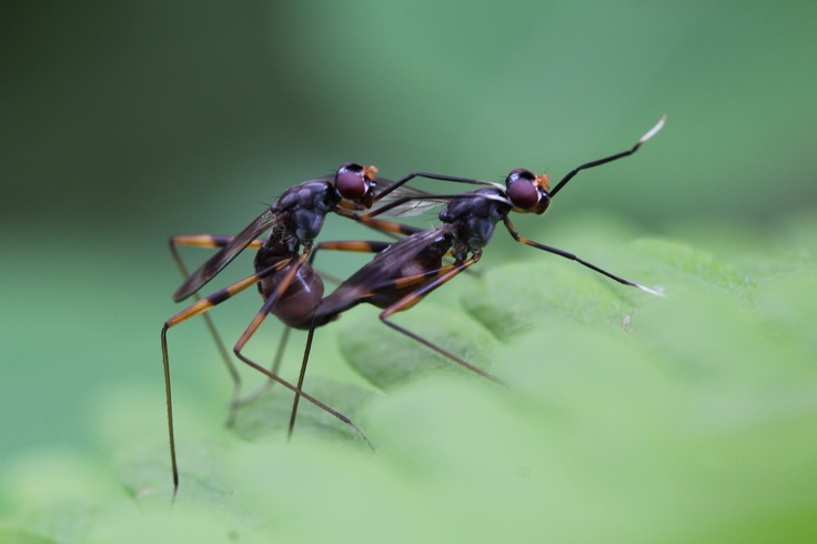 The love story of insects.. All your needs are to respect theirs as your love you have it in your hearts