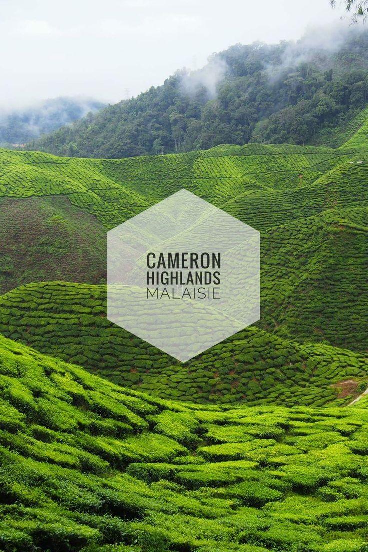 Voyage en Malaisie: visiter les plantations de thé aux Cameron Highlands. Guide de voyage, conseils, comment aller à Cameron Highlands, combien de temps y rester...