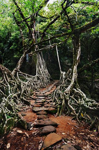 12 Most Dark And Mysterious Places On Earth: I want to visit all of them!  Living Root Bridge, Meghalaya, India