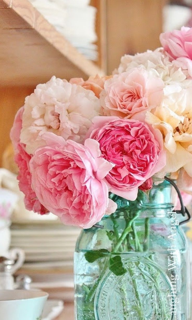 best pink flowers images on pinterest beautiful flowers