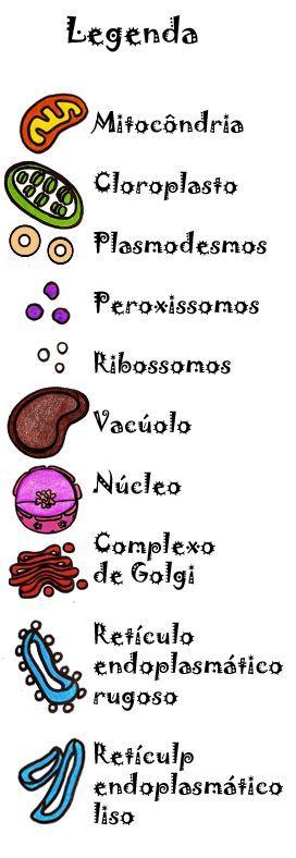 Partes da célula