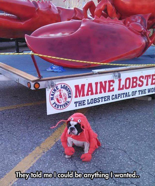 so I became a lobster