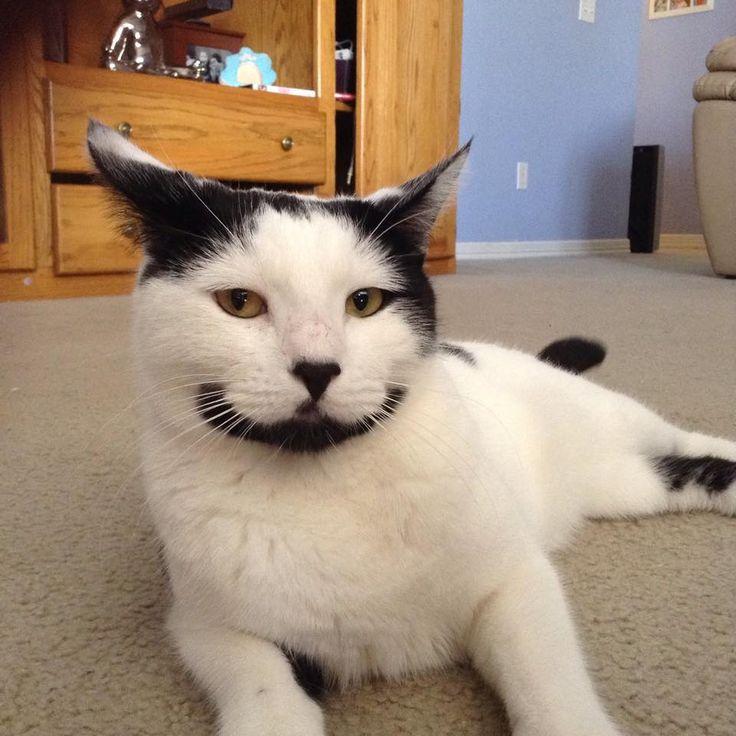 Voici Sirius, alias Happy cat, le chat qui sourit toute la journée