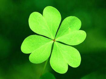 101 best Lucky Four Leaf Clover images on Pinterest Clovers Four