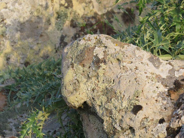 Altipiano della Giara, Sardegna: la Pecorella del Cancedda è ancora li che aspetta di essere ammirata da chi sa distinguerla tra i massi di basalto.