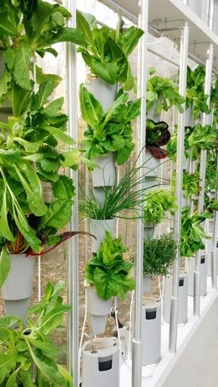 green idea: windowfarms