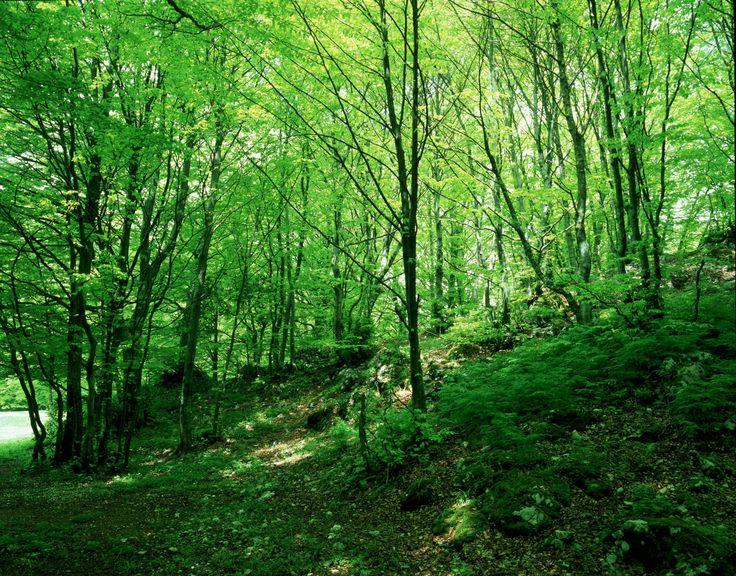 Sigillo (PG) • Parco del Monte Cucco | Monte Cucco Park   #AltaUmbria #Umbria