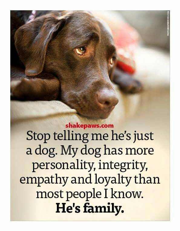 Seriously. If that's what tog believe, don't we a pet.They should always be family. Don't tell me how to love and feel.