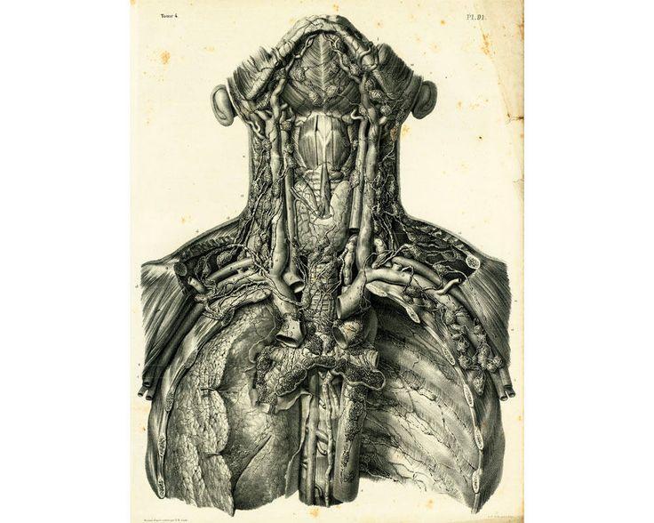 1836 Vaisseaux lymphatiques Thorax Cou Planche Anatomique Bourgery, Poster Anatomie Medecine de la boutique sofrenchvintage sur Etsy