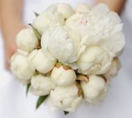 Cheerful Blast Bridal Bouquet - Cheerful Blast Bridal Bouquet > View Full-Size... | Blast, Cheerful, Bouquet, Aud, Purchased |