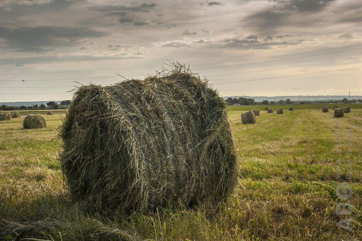 Over de kwaliteit van hooi gaan veel boerenwijsheden en mythes de ronde. Dit maakt het soms best moeilijk om te beoordelen wat wel en niet goed is voor je paard. Wetenschappers van de Universiteit van Kentucky bespreken de meest voorkomende…