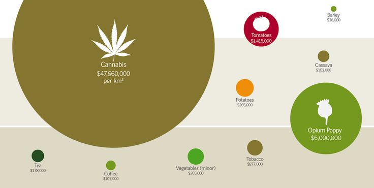 Is Cannabis the World's Biggest Cash Crop? - Civilized