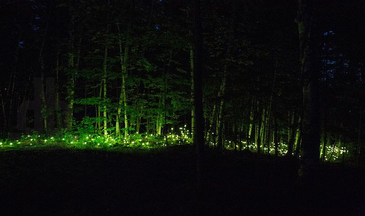 Nocturnal Trail Through Illuminated Forest Becomes Magically Immersive Experience - My Modern Met