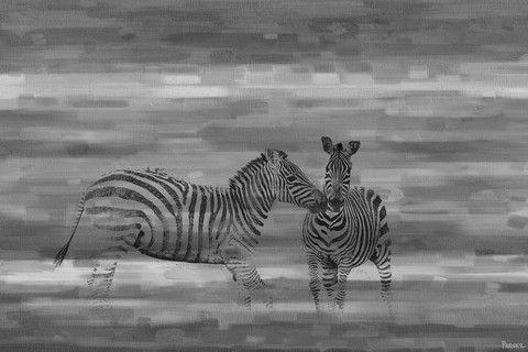 Zebra Romp - Marmont Hill