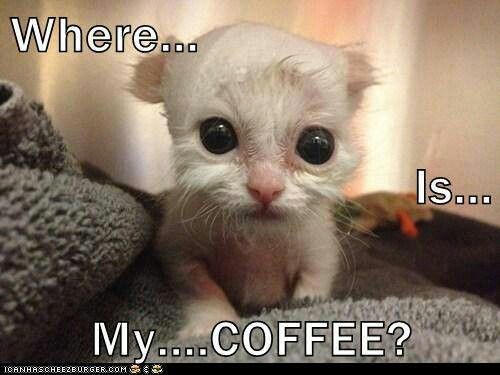 5a4b21c8ac383e6867e57725f489a3dd adorable animals funny animals 93 best cheers for coffee!! images on pinterest coffee break,Wheres My Coffee Meme