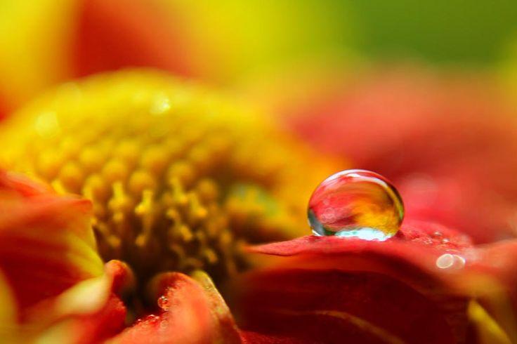 dews... by budi 'ccline' on 500px