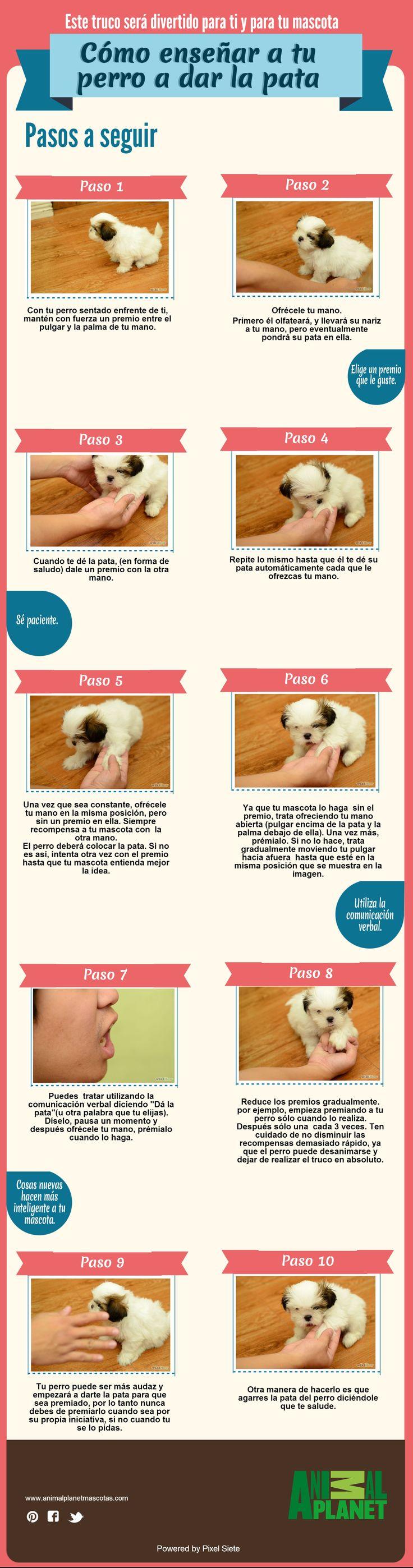Cómo entrenar a tu mascota #Mascotas #AnimalPlanetMascotas #PixelSiete