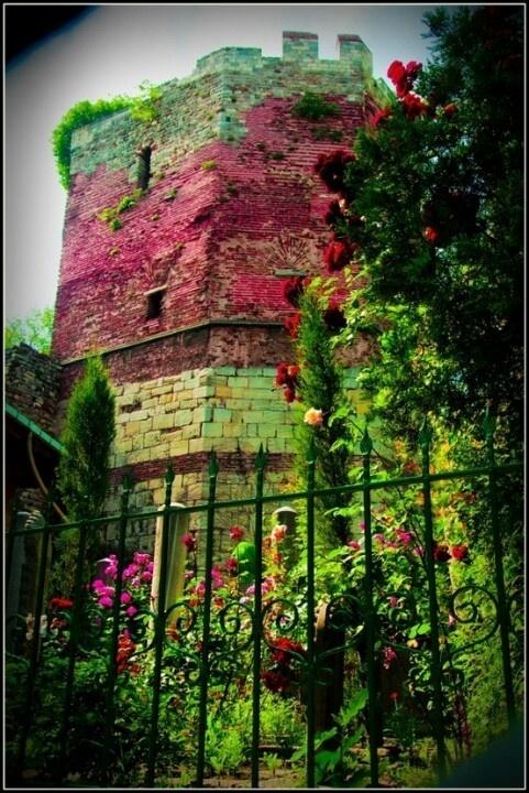 Kolory. #ogród #garden