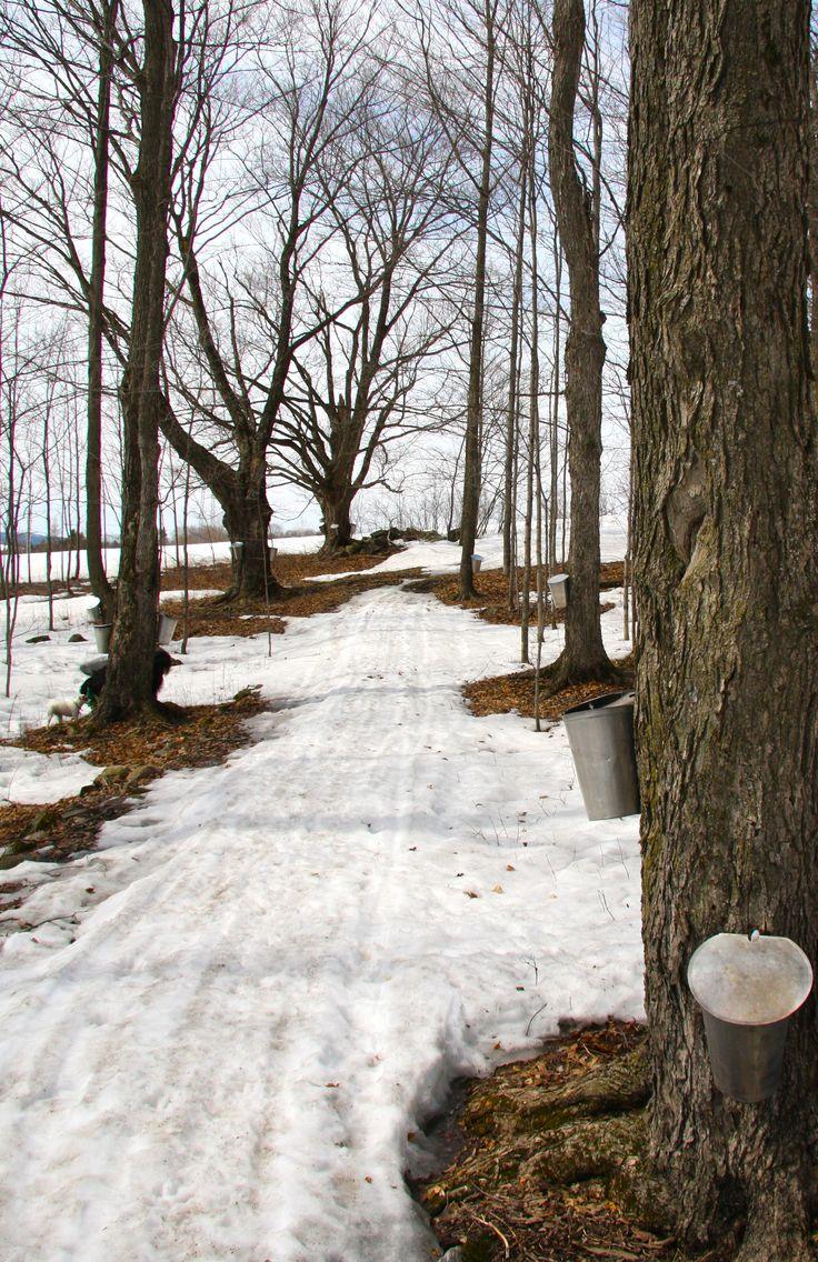 Érablière de la Beauce | Maple syrup making season..