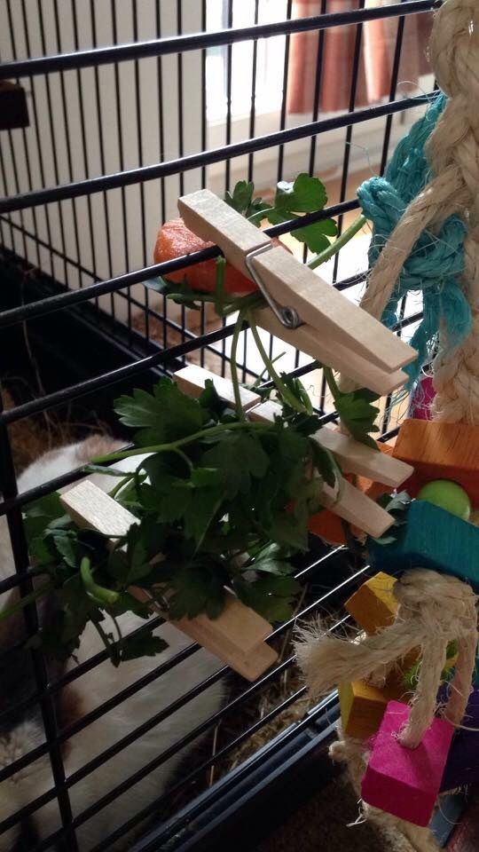 Wooden pegs can be used to hang up food to make the rabbit stretch up