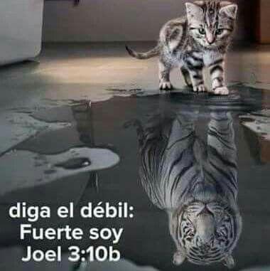 Jesús perfecciona su poder en nuestras debilidades. Él es tu paz en medio de la…