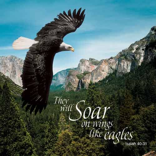 Image result for eagle soaring above a valley photo