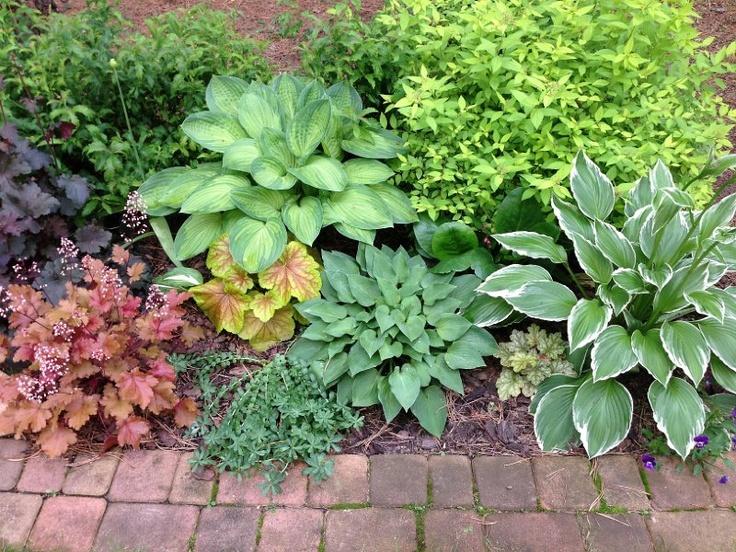 Mój ogród- hosty i żurawki