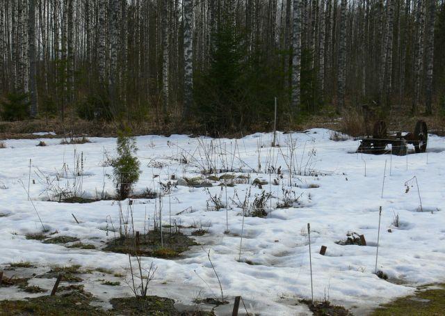Huhtikuun 26. päivä varjoisammalla puolella emotarhaa on vielä luntakin.