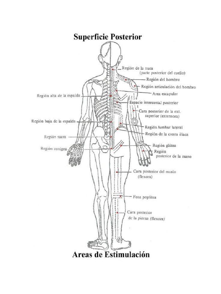 35 best ventosas images on Pinterest | Anatomie, Massage und Akupunktur