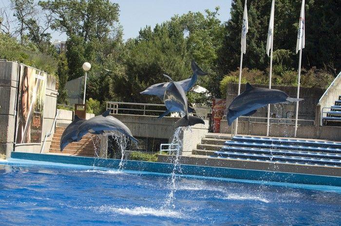 Мадрид для детей - Посещение зоопарка и парка аттракционов в Мадриде Каса де Кампо Casa de Campo