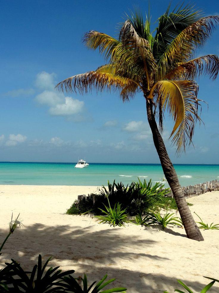 Midden Amerika reizen | Mexico | Isla Mujeres | Palmbomen strand met turquoise blauwe zee