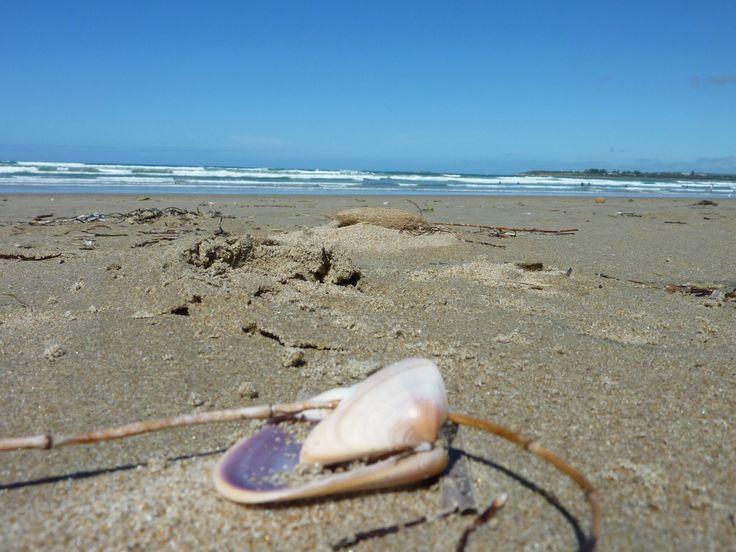 Shell, Middleton Beach South Australia. Photo Tania Cavaiuolo