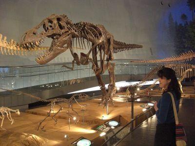 Dinosaur museum dinosaurs pinterest Dinosaur museum ohio