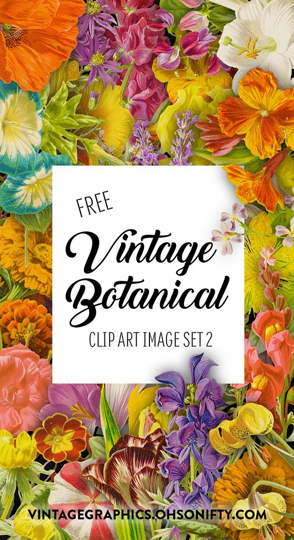 Royalty Free Images - Vintage Botanical Illustrations Set 2 - http://vintagegraphics.ohsonifty.com/royalty-free-images-vintage-botanical-illustrations-set-2/