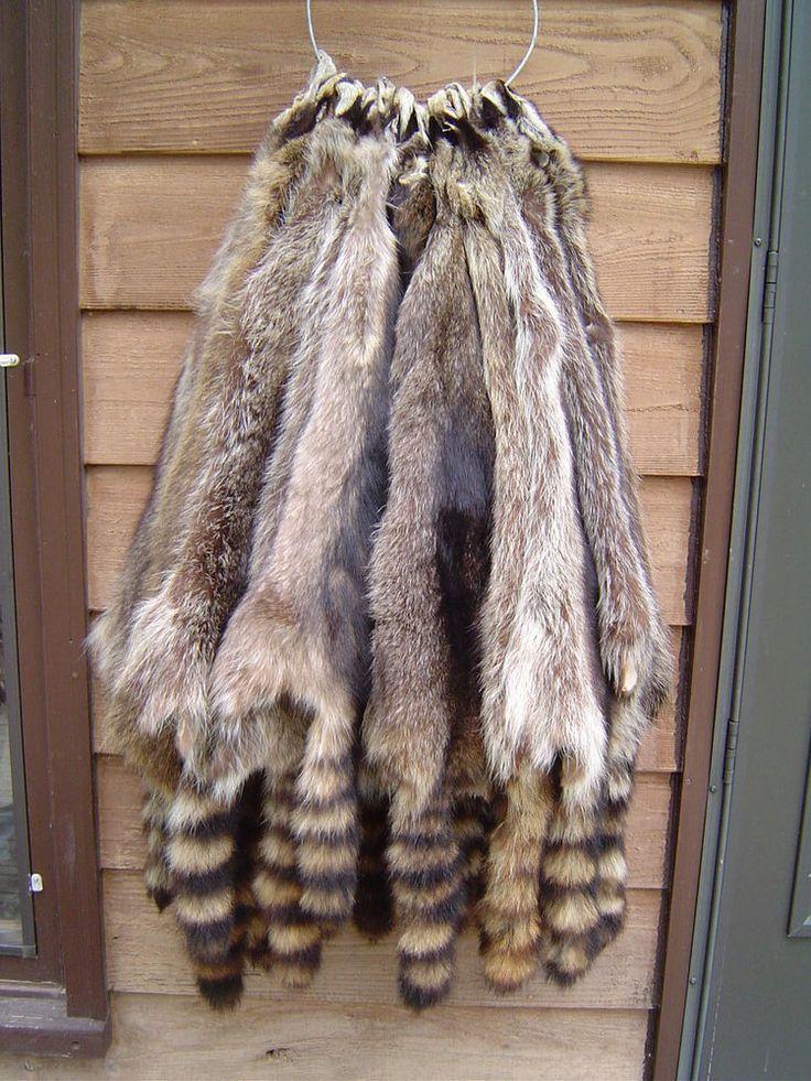 Pin on Fur ideas