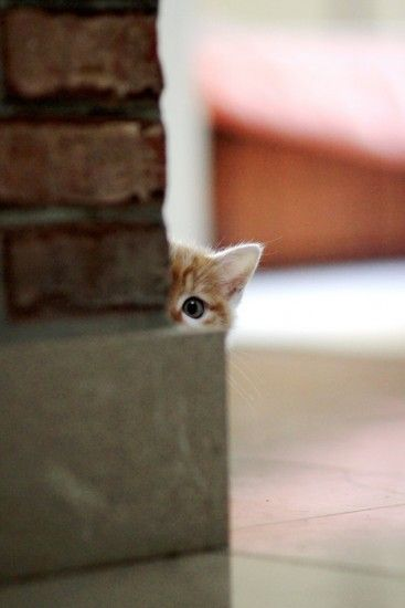 kitteh hide n seek, I used to play this with our cat Sunny