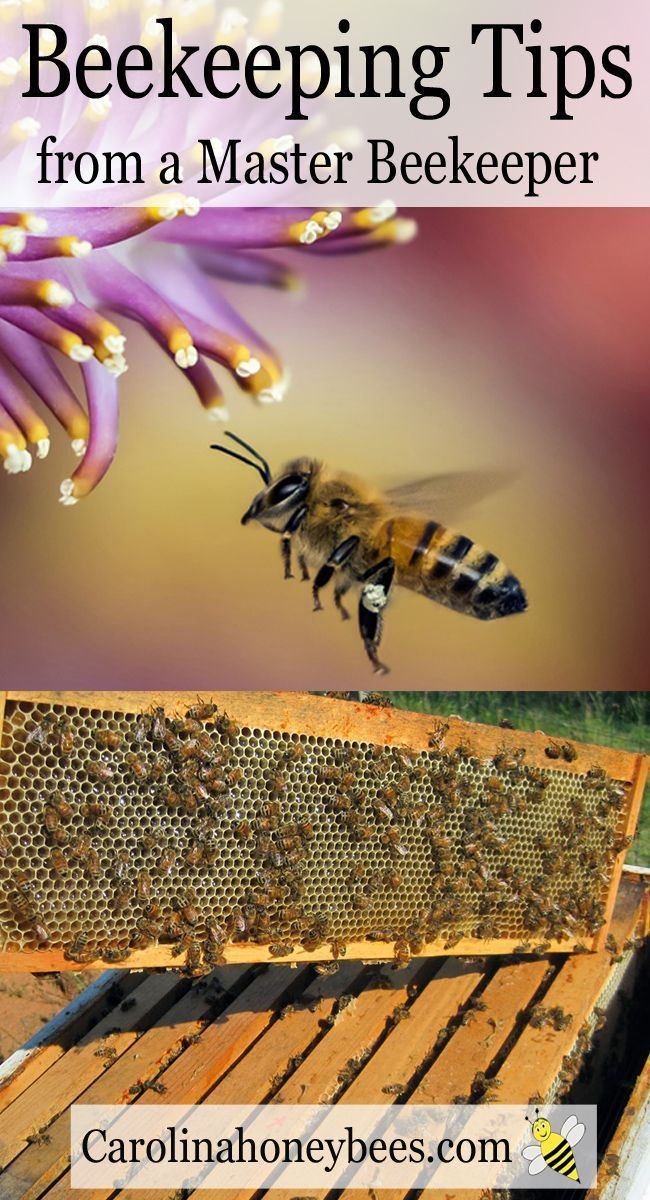 Raising honeybees is a fun activity.  Be a beekeeper and learn about bees - Carolina Honeybees Farm